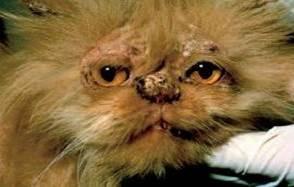 Idiopathic Persian Facial Dermatitis